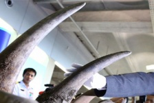 An Era of Unlimited Rhino Horns